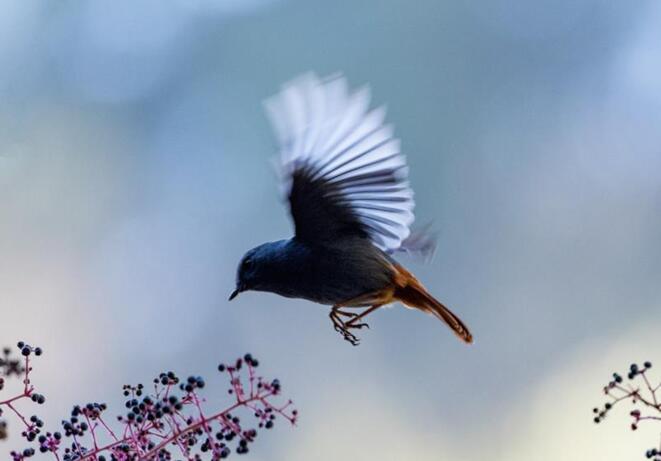 """生态梵净,鸟类家园--梵净山开展""""爱鸟周""""主题活动"""